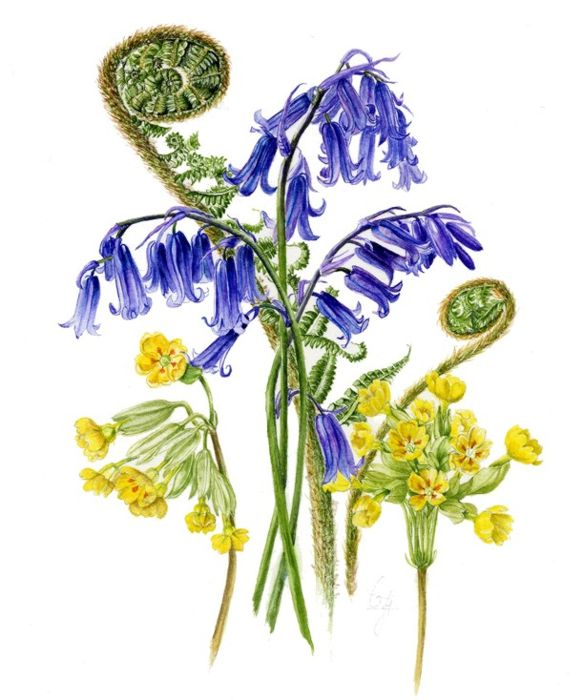 Bluebells, Cowslips and Fern - Watercolour - 31cm sq