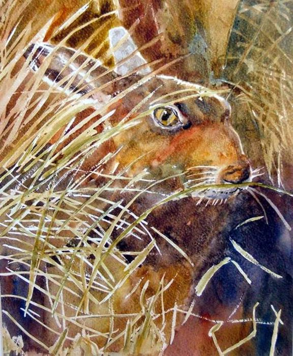 Hare - Watercolour