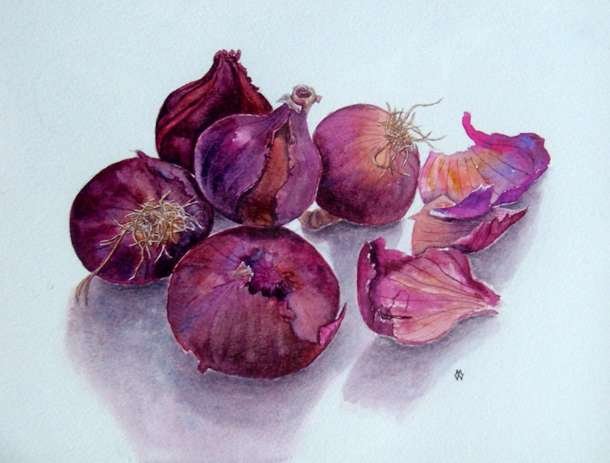 Onions - Watercolour